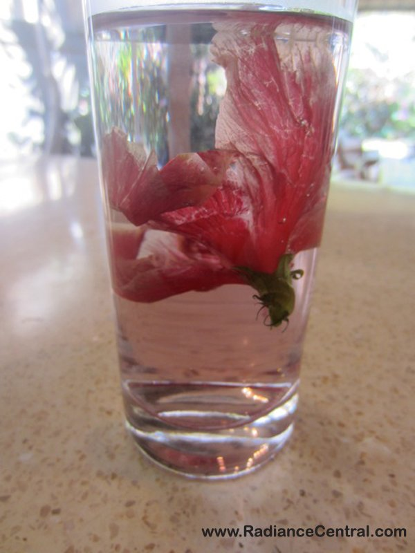 Fresh Hibiscus & Lime Tea Recipe, Ep80 - Radiance Central