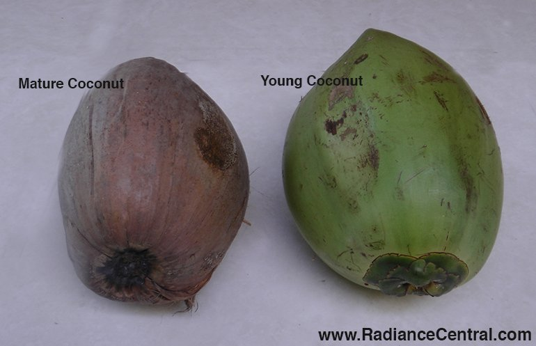 How To Open A Coconut-www.RadianceCentral.com