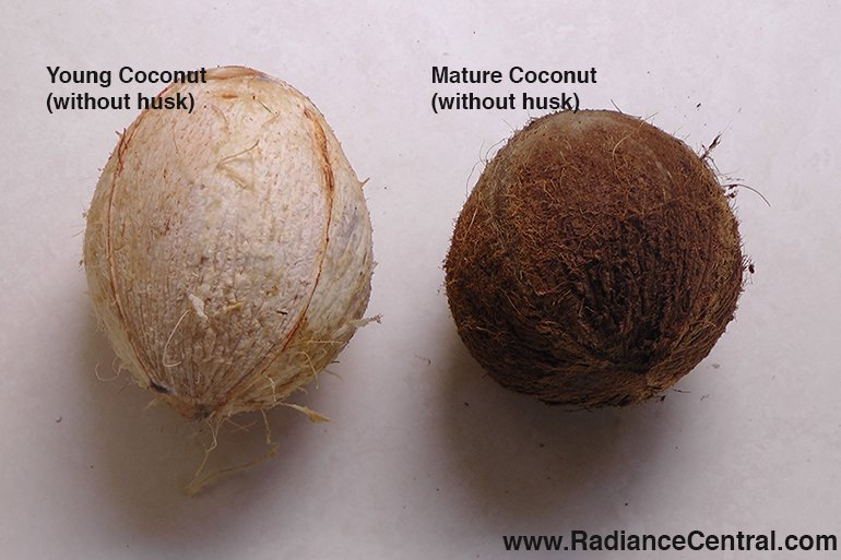 How To Open A Mature Coconut-www.RadianceCentral.com